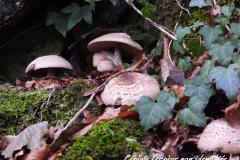 jean-goovaerts-guide-nature-florennes-20