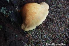 jean-goovaerts-guide-nature-florennes-8